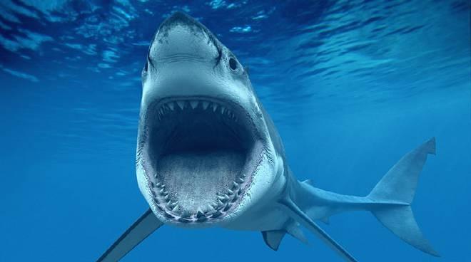"""La truffa delle finte email dell'INPS: gli """"squali"""" delle disgrazie"""